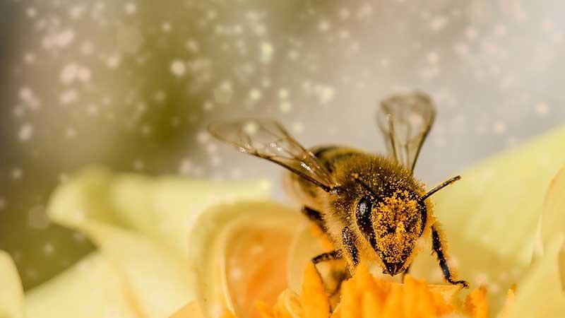 Las abejas son importantes en el mantenimiento de la biodiversidad de los ecosistemas.