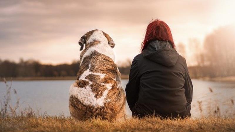 5 cosas que tu perro puede percibir de ti