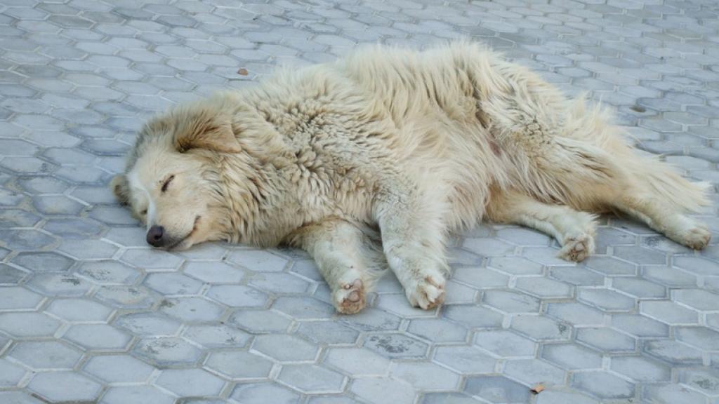 Perros callejeros Estambul.