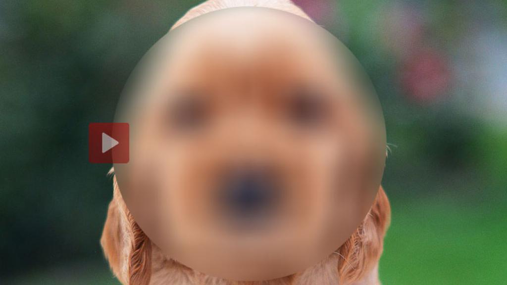Aparece increíble video de perrito con cara de humano y está causando furor mundial
