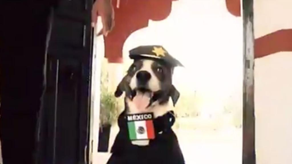 ¿Recuerdas al perrito 'Chilaquil' que se hizo viral en redes sociales por ser 'muy feo'?, pues parece que tiene un amigo policía.