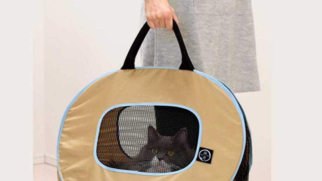 Compra lo necesario para cuidar a tu gatito.