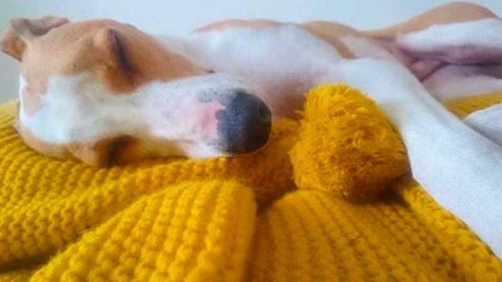 Las frazadas han protegido del frío a muchos cachorros.