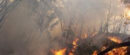 Los bomberos trabajan en el incendio en el Bosque La Primavera.