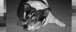 Humillan a mujer que quería abandonar a su perro