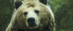 Domadora azota a oso por no hacer acto