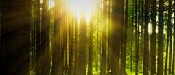 Organizaciones mundiales destina 500 mdd para reforestar selvas tropicales