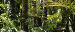Pablo Yglesias quiere conservar los bosques tropicales amazónicos