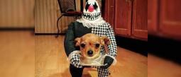 Estos disfraces de Halloween para perritos, te van a derretir el corazón, ¡tienes que verlos!.