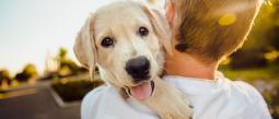crematorio público para mascotas CDMX precio costo