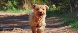 Consejos para desinfectar a tu perro después de sacarlos a pasear
