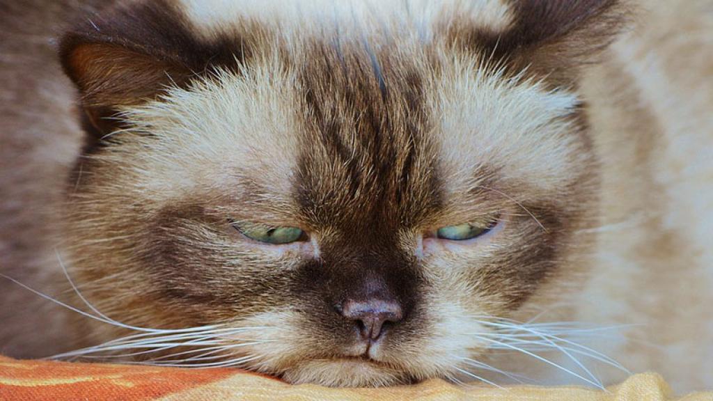 Las redes sociales se visten de luto por la muerte de Grumpy Cat