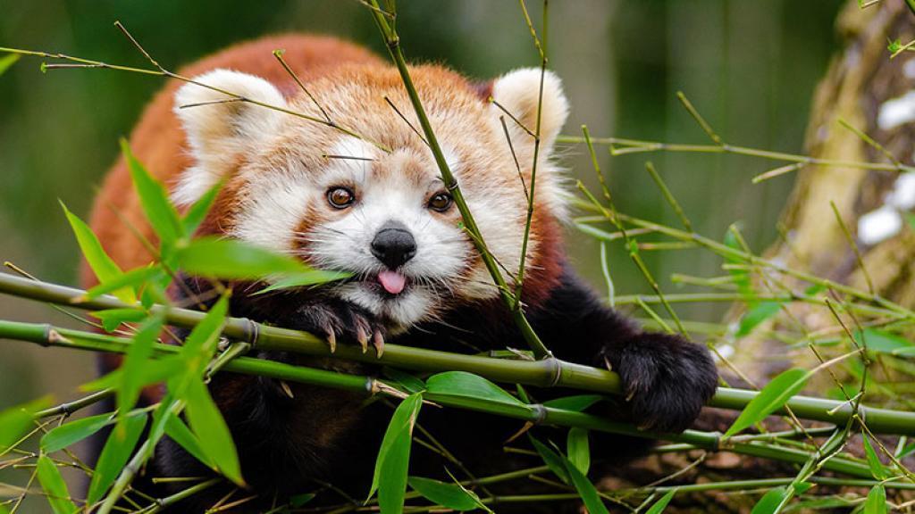 Estos son los 7 animales bebés más tiernos