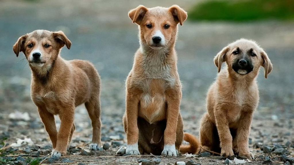 La señora volvió a recoger a varios perritos para tenerlos en su hogar, pues en 2013 ya tenía más de 100 perros y 20 gatos