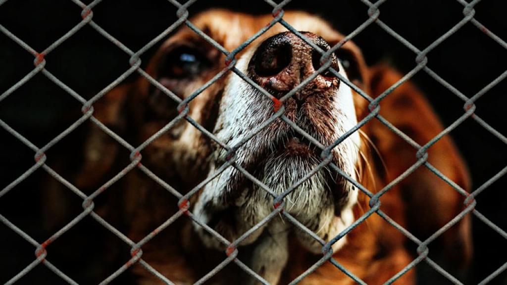 El secuestro a perros ya es un delito en Puebla